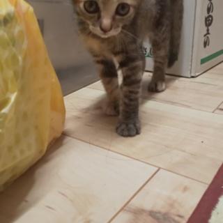子猫の里親になっていただける方よろしくお願いします