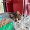 可愛い子猫2ヶ月助けて!県外譲渡可