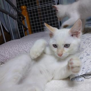 目はブルーグレー!!美形女子♡子猫(*//艸//)