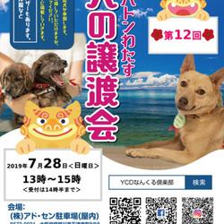 YCDなんくる倶楽部 いのちのバトンわたす犬の譲渡会(第12回)