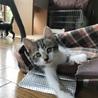 人も猫も大好き 甘えん坊のうり君 3ヶ月 サムネイル2