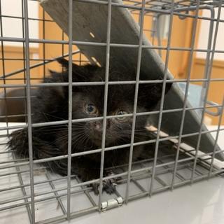 黒い子猫です!FIVを持ってます!