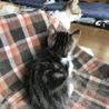 人も猫も大好き 甘えん坊のうり君 3ヶ月 サムネイル3