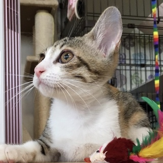 華奢な美猫のネネ…3ヶ月