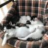 人も猫も大好き 甘えん坊 とこやん君 3ヶ月  サムネイル3
