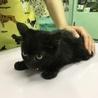 スリスリ、ゴロゴロな黒猫ちゃん サムネイル3