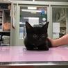 スリスリ、ゴロゴロな黒猫ちゃん サムネイル4
