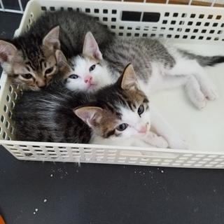 3匹の子猫 里親さん探しています!