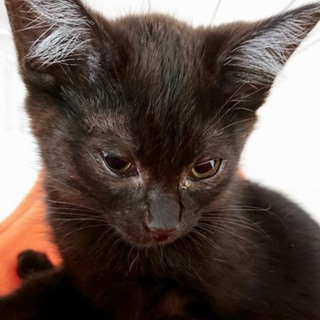 黒猫美人の、すみちゃん