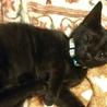 初心者歓迎!可愛い懐っこい黒猫4兄妹+2兄妹 サムネイル3