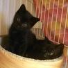 初心者歓迎!可愛い懐っこい黒猫4兄妹+2兄妹 サムネイル4