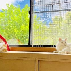 夏空とネコと、ひとりごと