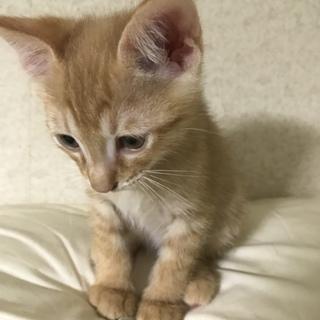 生後2ヶ月のトラネコちゃんです。