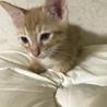 生後2ヶ月のトラネコちゃんです。 サムネイル2