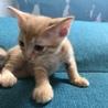 生後2ヶ月のトラネコちゃんです。 サムネイル4
