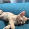生後2ヶ月のトラネコちゃんです。 サムネイル5
