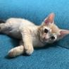 生後2ヶ月のトラネコちゃんです。 サムネイル6