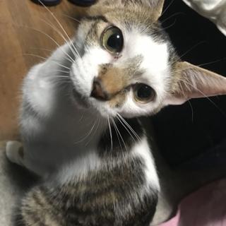 白茶黒のメス猫ちゃん