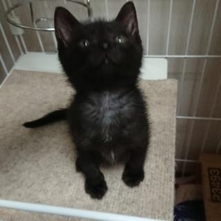 黒猫チェリーちゃん里親さん募集