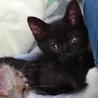 黒猫チェリーちゃん里親さん募集 サムネイル2