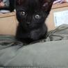 黒猫チェリーちゃん里親さん募集 サムネイル3