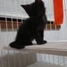黒猫チェリーちゃん里親さん募集 サムネイル4