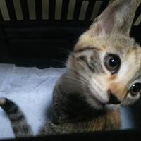 生後三か月弱の子猫二匹
