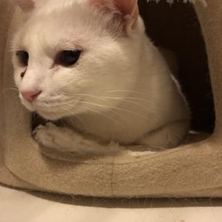 大人しいメス猫です。