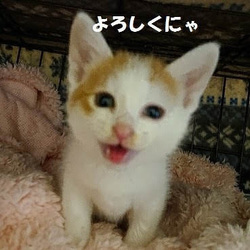 大阪市北区*子猫 &大人ねこの幸せさがし譲渡会