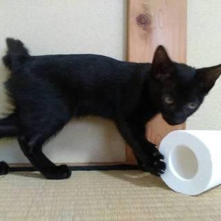 黒猫かぎしっぽのテノール♂