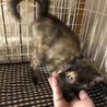 甘えん坊のサビ猫ラディウスちゃん サムネイル2