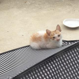 母猫とはぐれた仔猫