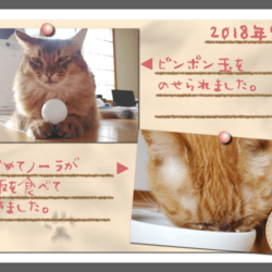 「うちの猫たちのフォトアルバムを作りました(中編)」サムネイル1