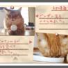 うちの猫たちのフォトアルバムを作りました(中編)