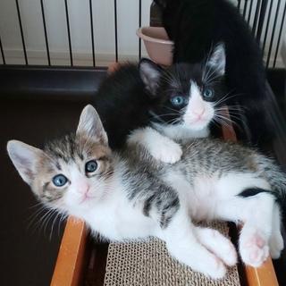 丸顔で可愛い美猫4兄妹を2匹ずつ