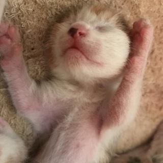 産まれたての子猫ちゃんです