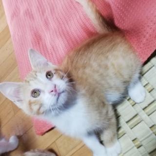 急募!!5匹の子猫の里親さん探しています