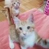 急募!!5匹の子猫の里親さん探しています サムネイル2
