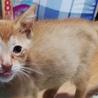 急募!!5匹の子猫の里親さん探しています サムネイル4