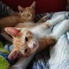 急募!!5匹の子猫の里親さん探しています サムネイル5
