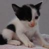 可愛い子猫が収容されました。収容期限7/24朝迄