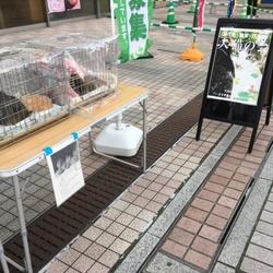 7月の里親会(南大沢)