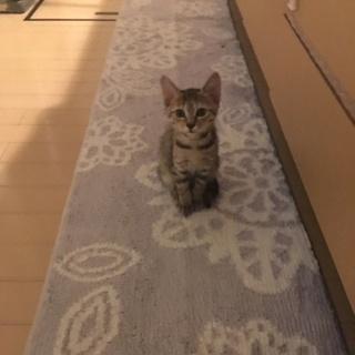 子猫の里親様を探しています