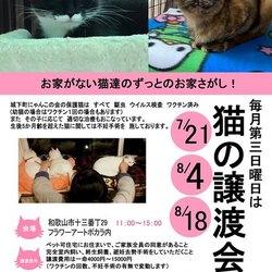 保護猫たちの大譲渡会