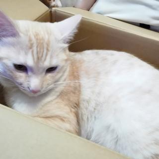里親さん募集中♂毛並みのいい猫ちゃんです