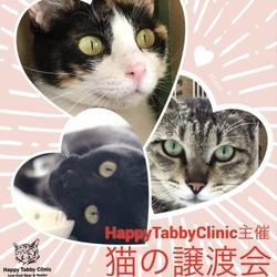 第7回【猫の譲渡会】ハッピータビークリニック主催