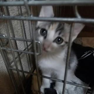 三毛猫3姉妹のスーちゃんです。