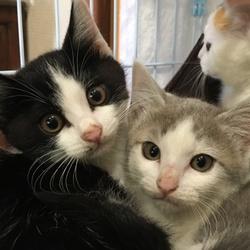 寒川町役場での保護猫譲渡会!