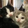 寒川町民センターで保護猫譲渡会!