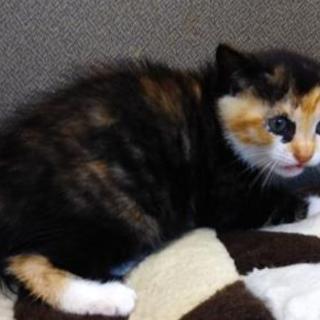 可愛い子猫が収容されています。収容期限7/25朝迄